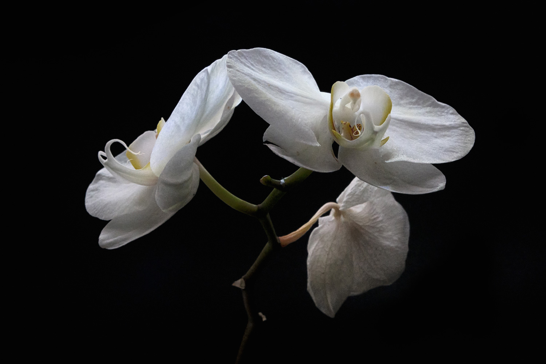 Ishmil Waterman Fine Art Flowers